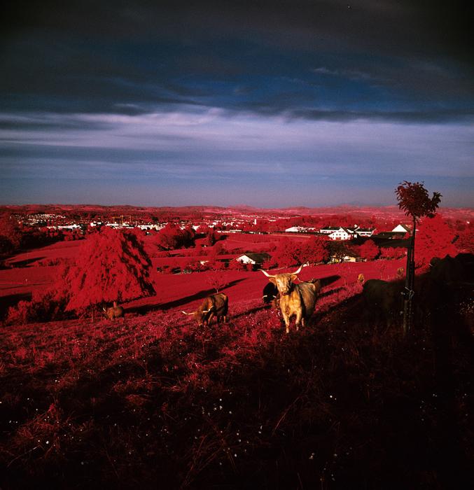 Фотографы требуют возобновить производство Kodak Aerochrome. Кейтер Мур.
