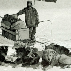 Arctic Exploration. Personalities. pic: circa 1911. Captain Roald Amundsen, (1872-1928) Norwegian explorer the first man to navigate the North west Passage and to reach the South Pole, pictured with his Husky dog team.