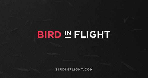 Картинки по запросу birdinflight.com